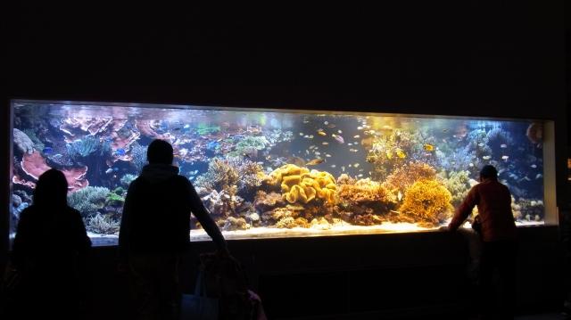 鳥羽水族館行ってきた!華麗な水槽・魚・水棲生物画像まとめ