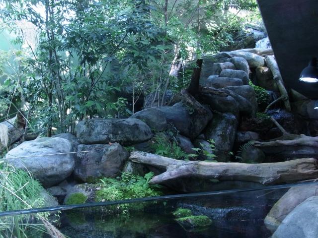 渓流をイメージした大型の展示水槽