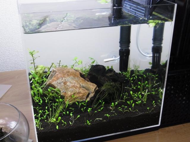 小型水草水槽の立ち上げ!設置場所から濾過までコレで完璧!