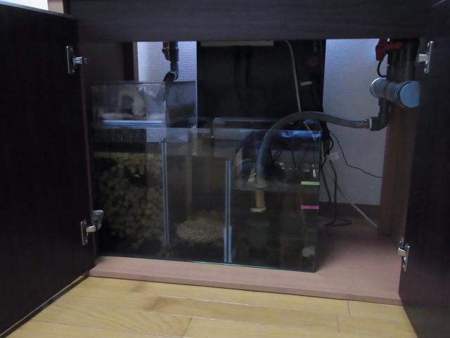 自作した濾過槽をセッティングする