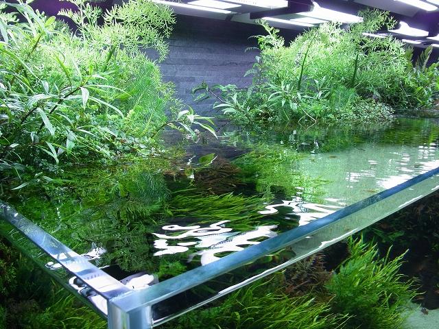 水上葉のレイアウト水槽