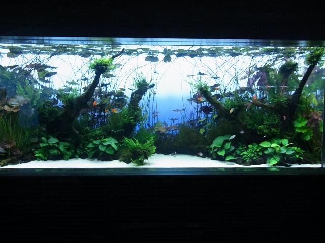 浮葉性の水草を使った面白いレイアウト