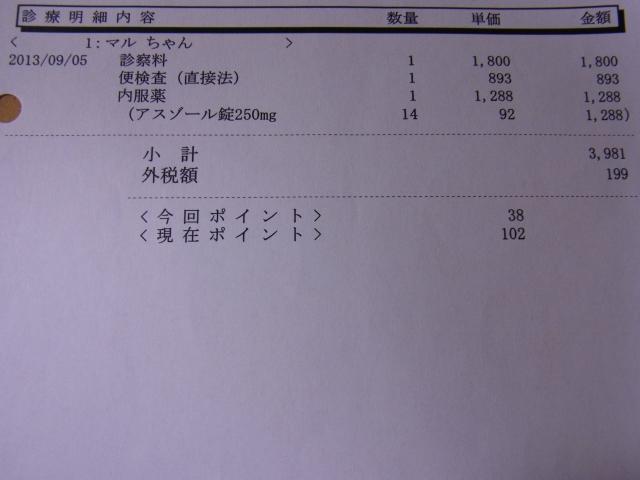 動物病院の診療明細書