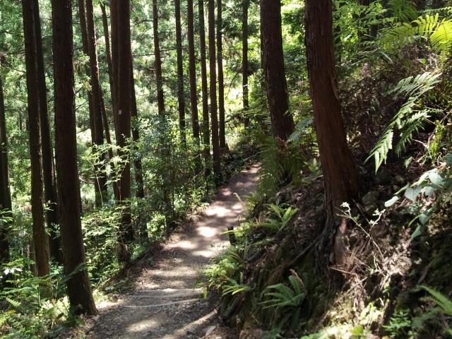 気持ちのいい林道
