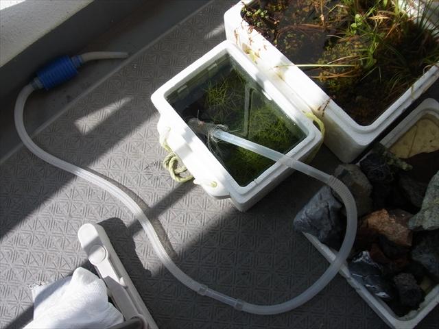 水浸しになった水上栽培容器の排水