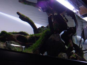 亀とアクアリウムの融合!レイアウト水槽で魚との混泳飼育!