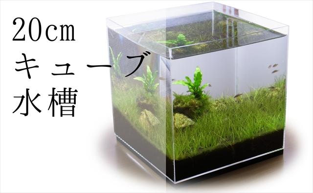 20cmキューブ水槽