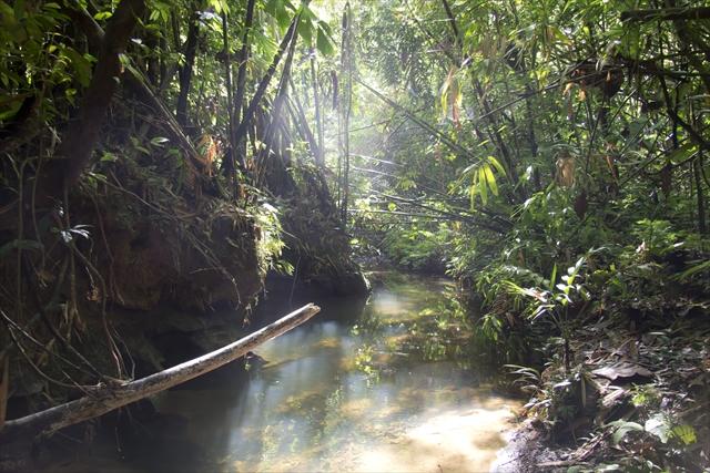 Jungle. Sarawak, Borneo. Malaysia