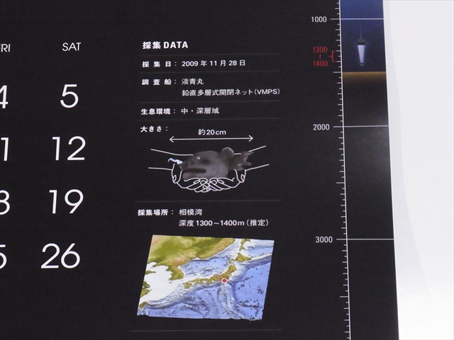深海魚のデータ部分
