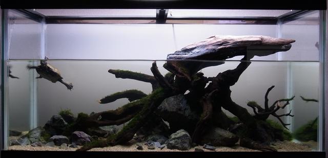 ニホンイシガメの亀飼育水槽