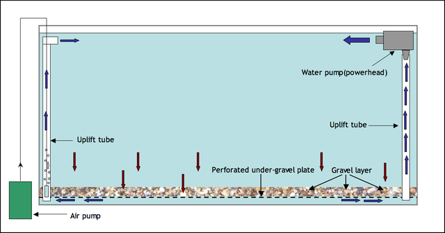 水槽用ろ過装置「底面フィルター」の使い方と底面濾過の仕組み