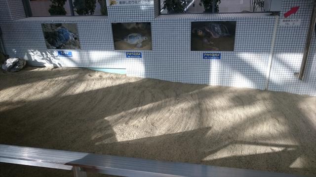 ウミガメ回遊水槽の陸地・砂場