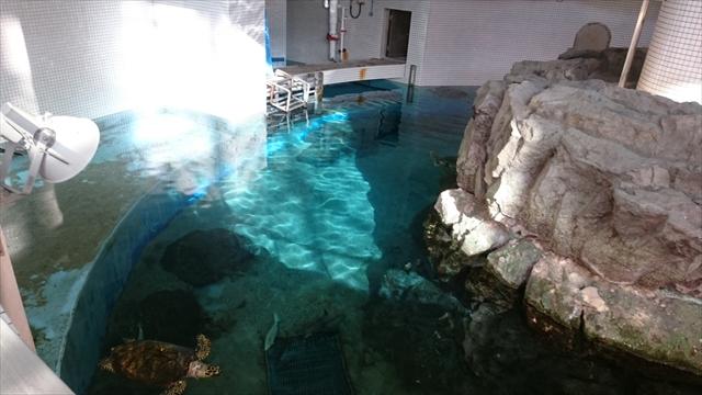 上から見たウミガメ回遊水槽