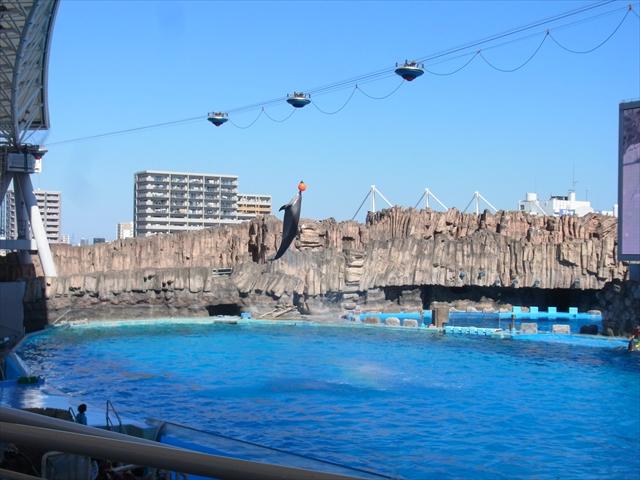 イルカショーで大ジャンプを見せるカマイルカ