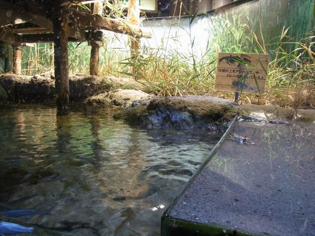 名古屋港水族館の干潟水槽