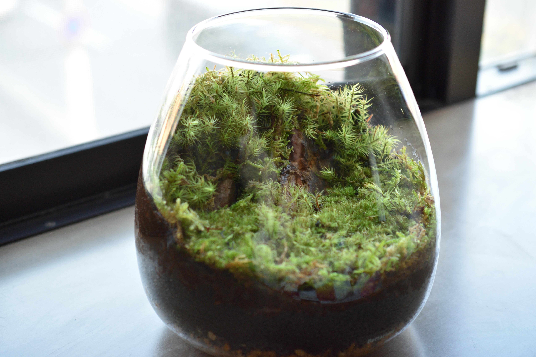 苔テラリウムの作り方-必要なもの・苔の種類・作業手順を徹底解説!